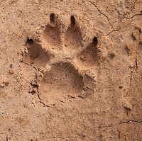 Find animal tracks